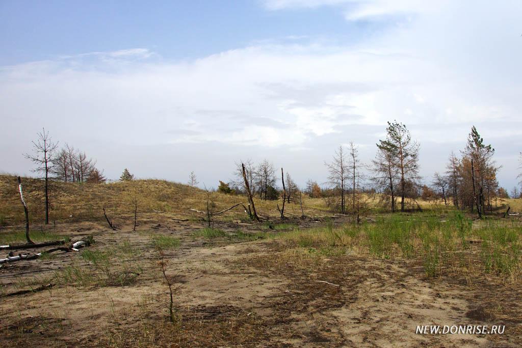 Ландшафт после пожара